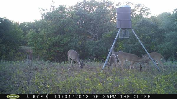 Deer hunts near fort worth 200 fort worth springtown outfitters
