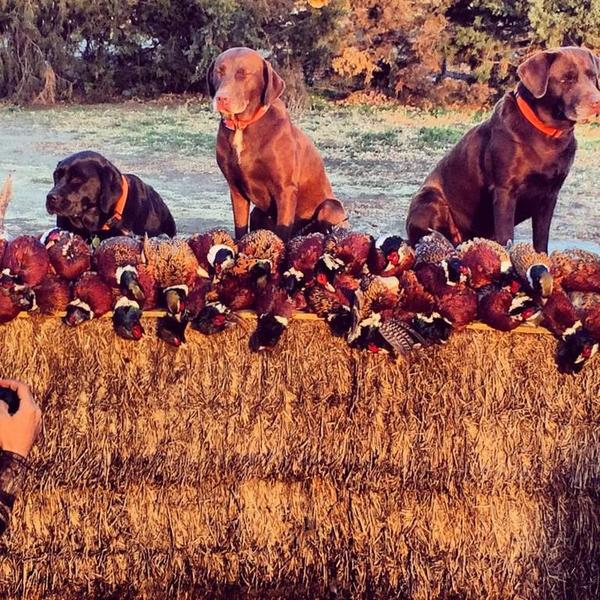 Winner South Dakota Hunt | Upland Bird Hunting | Texas ...