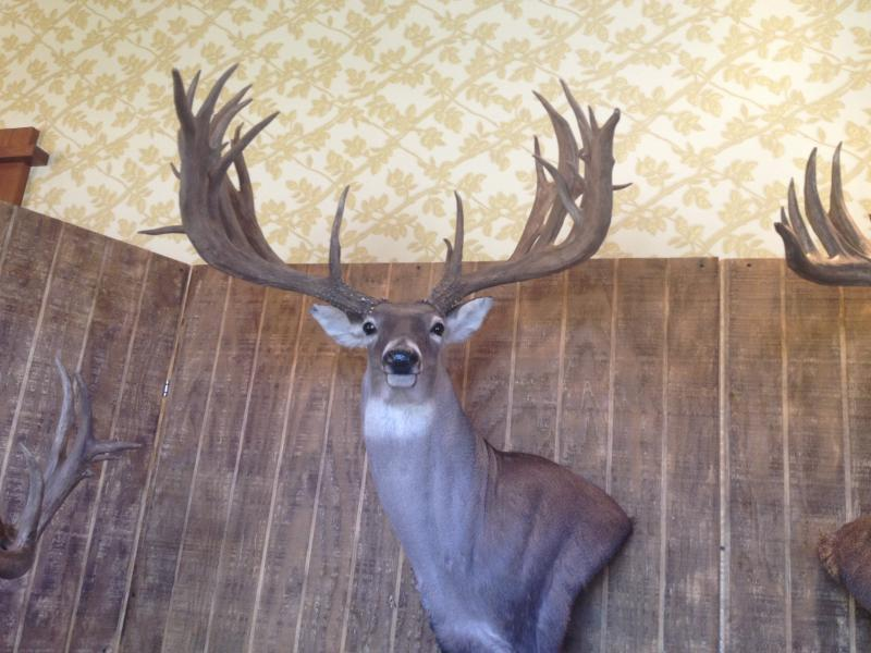 Best Typical Whitetail of 2015 Award - Texas Hunting Forum