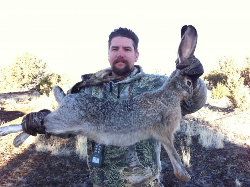 rabbit hunting texas