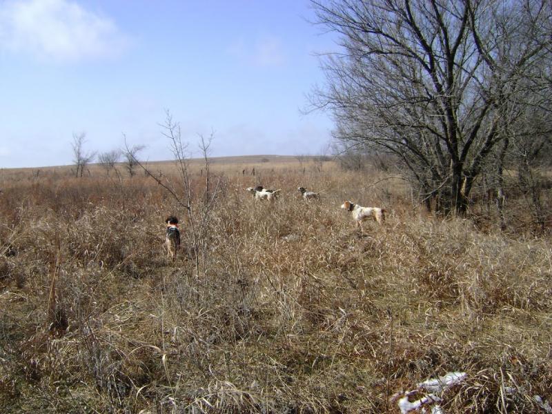 Dogs Backing | Upland Bird Hunting | Texas Hunting Forum