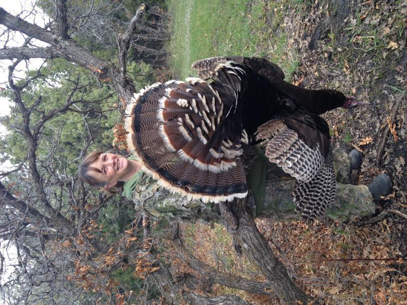New mexico spring turkey hunts outfitters guides for How much is a fishing license in new mexico