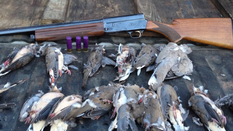 Time to start this one          your dove gun        - Texas
